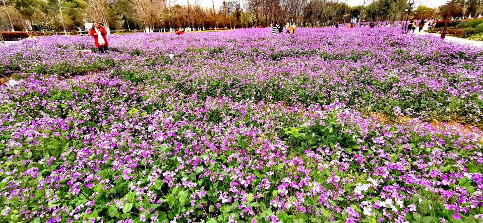 Field of purple flowers | Arizona Reproductive Medicine Specialists